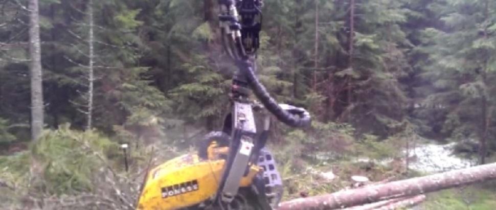 괴물 벌목로봇,하루종일 페북달궈,공유만 74만여건